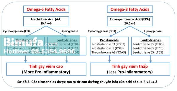 Các eicosanoids được tạo ra từ con đường chuyển hóa của acid béo omega 3 và 6