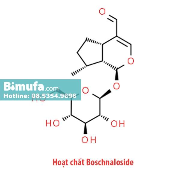 Hoạt chất Boschnaloside làm giảm quá trình lão suy, tăng tuổi thọ cho con người
