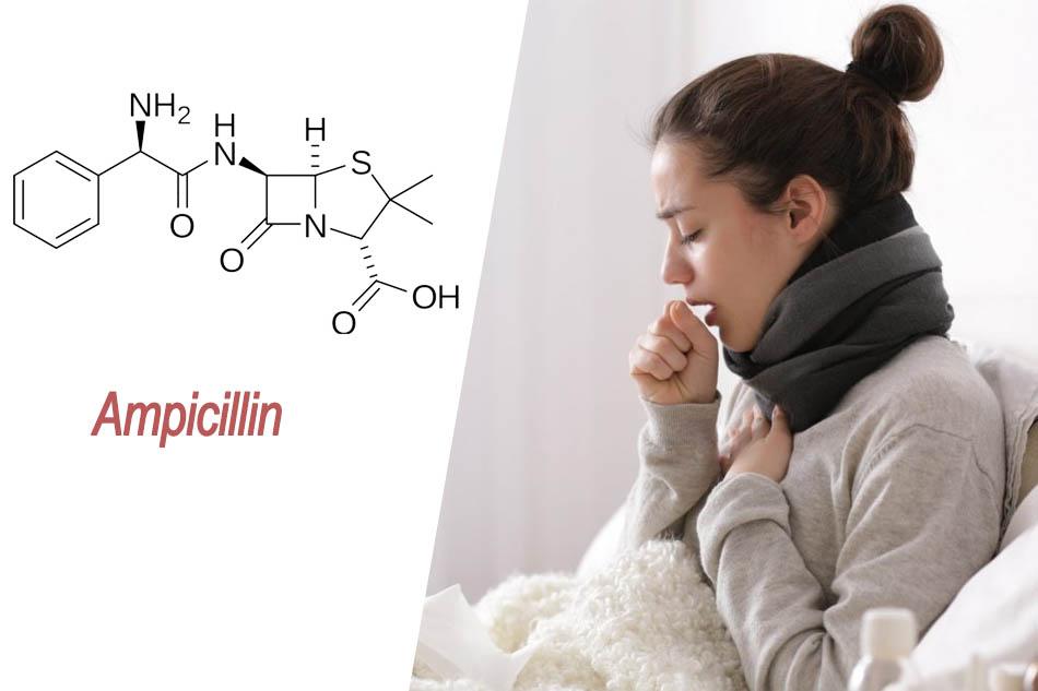 Ampicillin chỉ định điều trị viêm phế quản