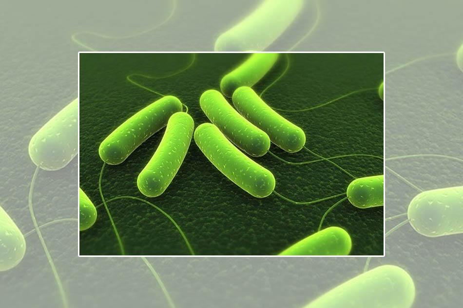 Vi khuẩn Helicobacter pylori